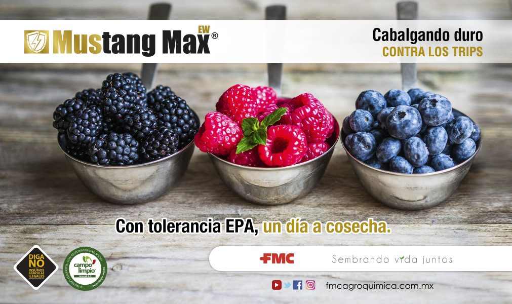 03-MUSTANG-MAX-EW-BERRIES-1011x600